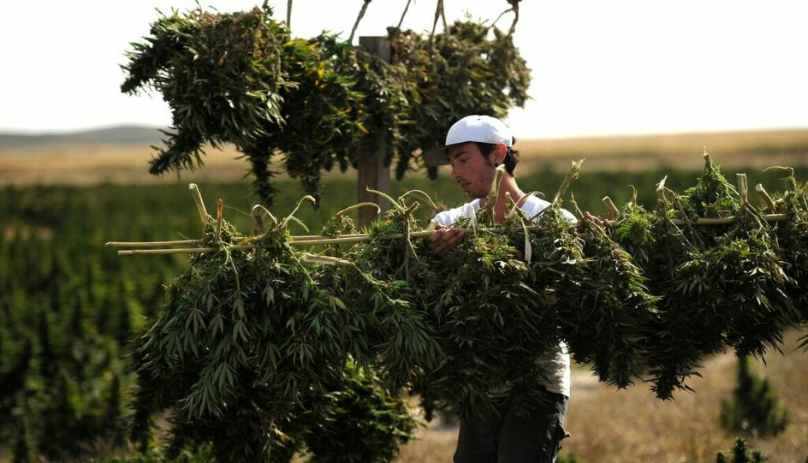 """""""Cannabis Deals With COVID-19"""" Rallied Weed Stocks. Marijuana Might Help Pandemic– If Somebody Pays To Find Out."""