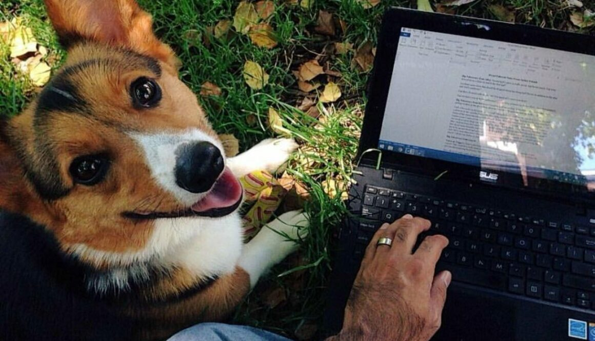 An author wrote a stunning tribute to his late dog disguised as composing recommendations