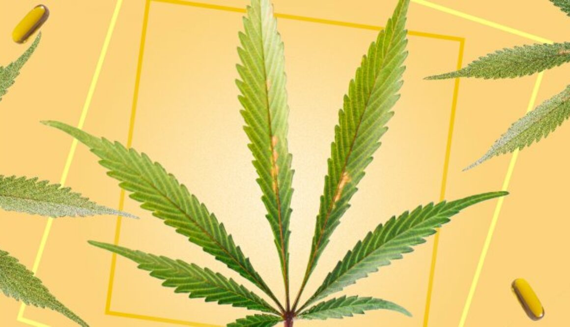 Hemp Mythbusters: 5 Misconceptions About The Plant That Required To Be Debunked